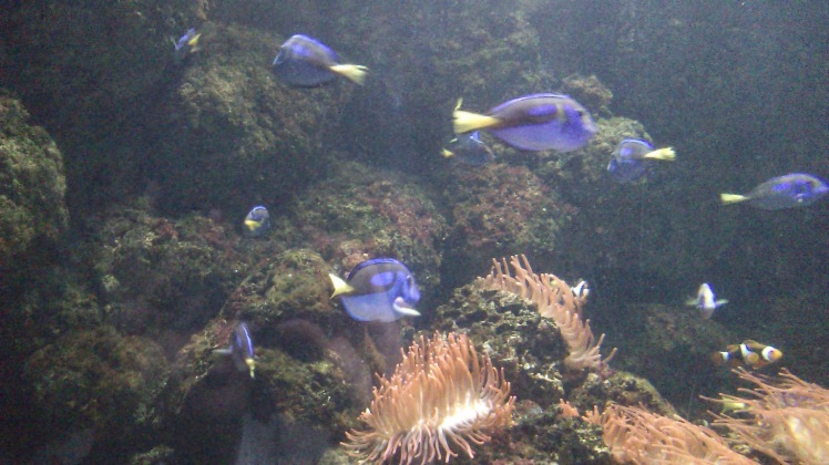 Dori e Nemo