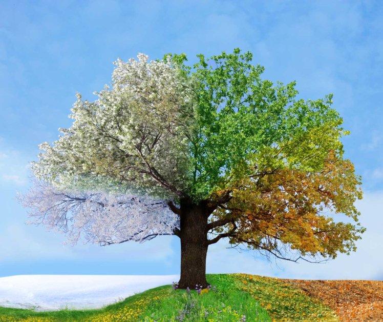 four-seasons-tree-nexus_6