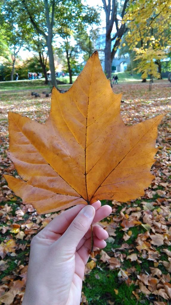 outono-cardiff